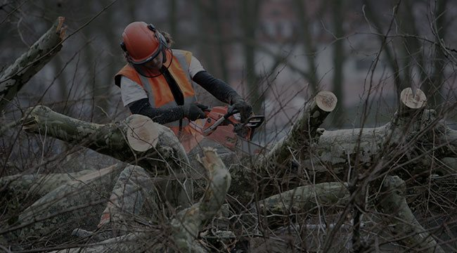 Sparks Tree Service